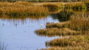 make sure you have all the necessities for an Everglades adventure