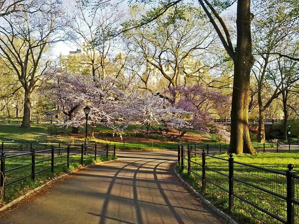A central park isn't complete without a trip to the Zoo