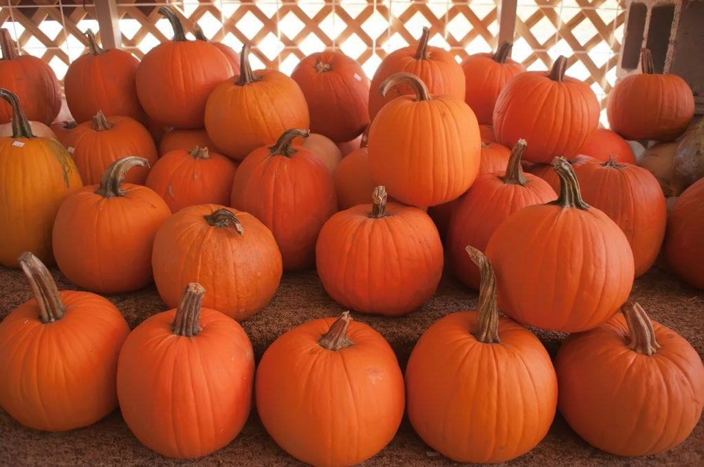 have you gotten your pumpkins yet?