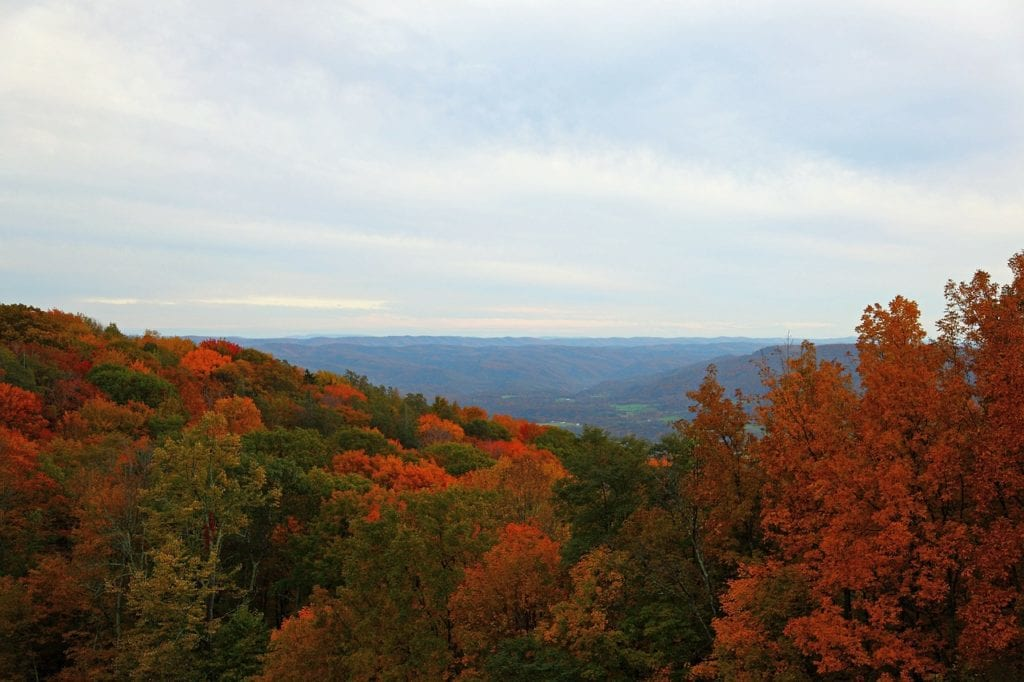 check out the amazing wild in West Virginia