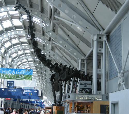 Dinosaur skeleton at O'Hare Airport in Chicago.