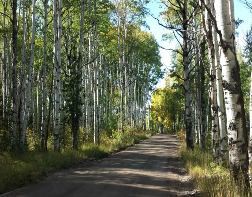 Rolling Through Steamboat Springs in the Fall