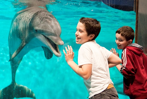 Kids get up close to the animals at the Indianapolis Zoo. Photo credit: Visit Indy