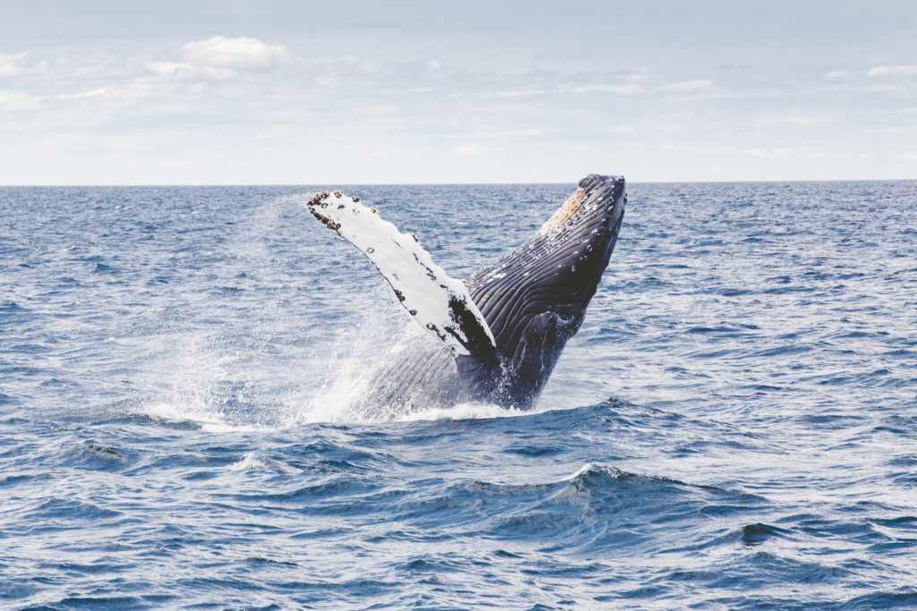 See a humpback whale on an ecolodge family vacation.