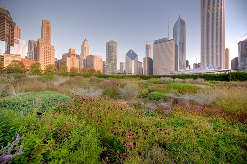 The Lurie Garden is a serene spot in the bustling city. Photo credit: City of Chicago
