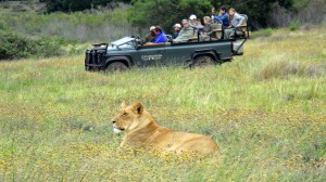 Family learning adventures in Africa including Gondwana Game Preserve. Photo courtesy Preferred Family collection.
