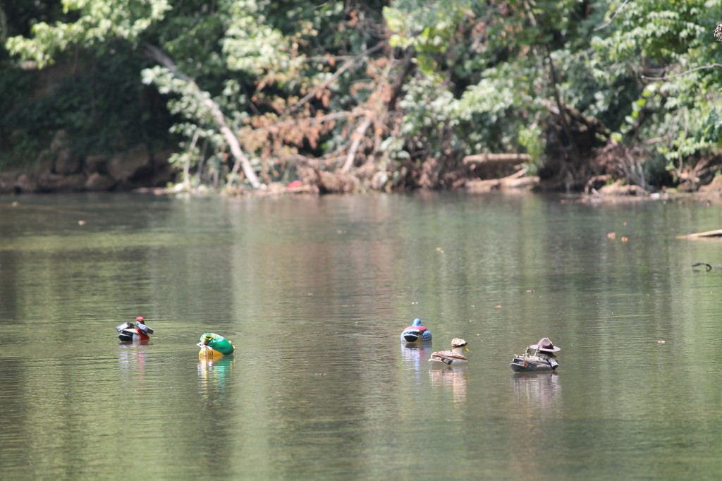 Duck Races at Old Settlers Day  - Photo Credit Becky Davenport/ Missouri Traveling Mom