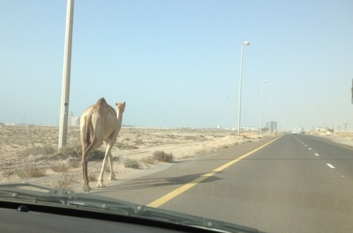 10 Things I'll Miss About Living in the United Arab Emirates