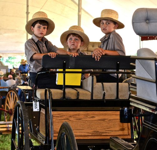 Amish Auction – Bet You Didn't Know What a Fun Family Outing It Can Be