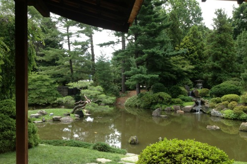 A japanese house garden and koi pond in philadelphia for Japanese koi pond garden