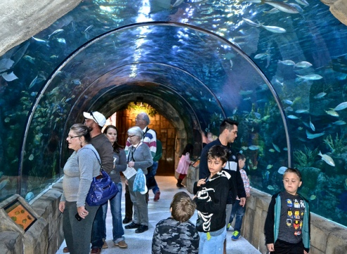 Visiting New Orleans Aquarium, A Treat for Parents and Kids
