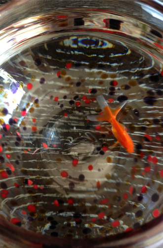 Palomar Pet Fish-Kids Are A Trip