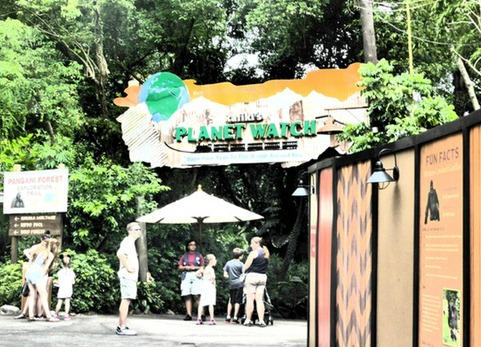 Dining Options When Visiting Rafiki Planet Watch at Animal Kingdom