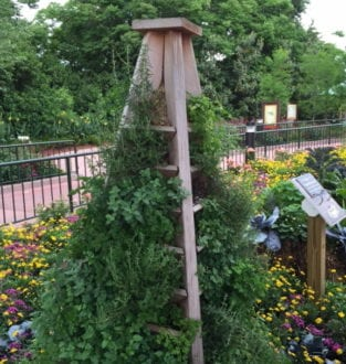 Gardens stretch tall at Disney flower festival. Photo by Christine Tibbetts, Blended Family TravelingMom