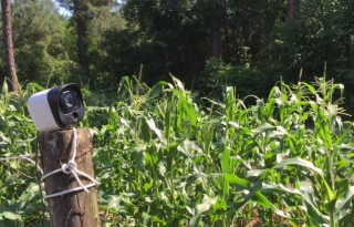 Will the Panasonic surveillance system help a backyard gardener? Photo by Christine Tibbetts, Blended Family TravelingMom