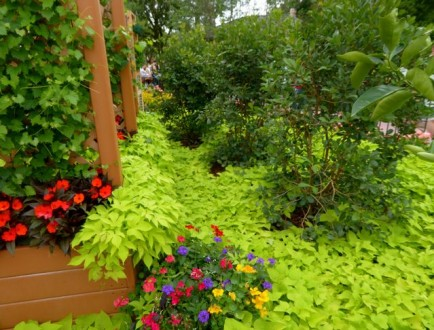 What a Gardener Can Learn at the Epcot Flower and Garden Show