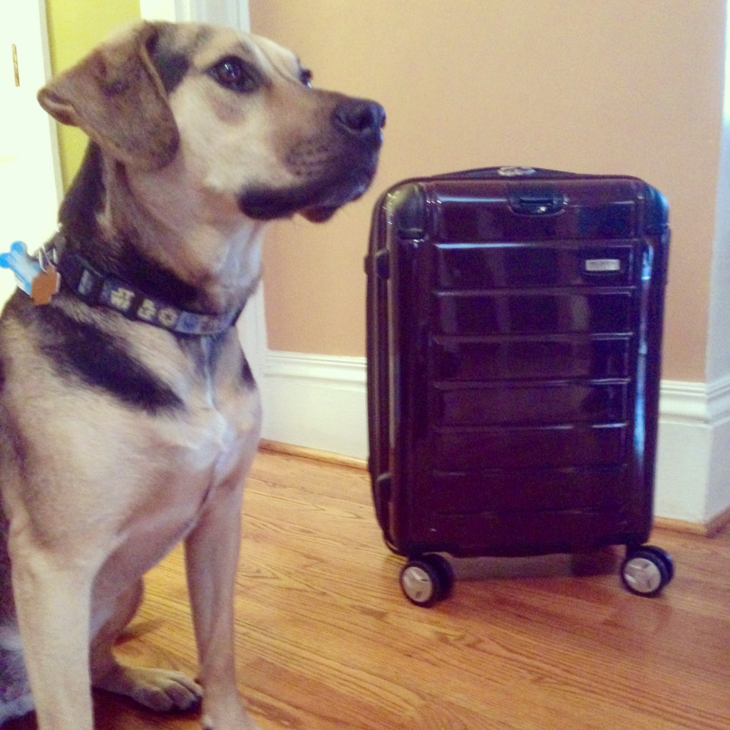 Scout knows how to pack a suitcase. He and some Traveling Dads offer their packing tips.