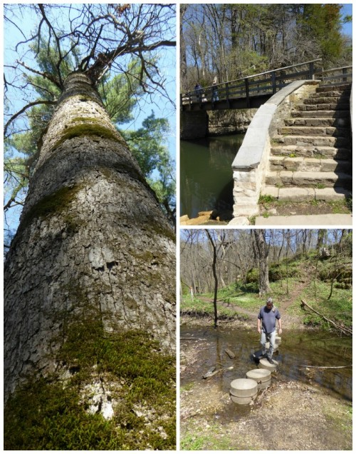 natural wonders of White Pines State Park