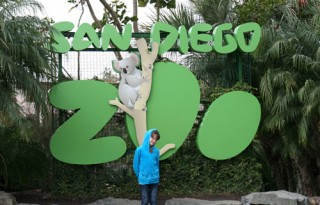 How to See Everything at the San Diego Zoo ina Single Day