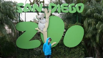 In a zoo this expansive, how can one cover it in one day? Read on for tips on how to see it all in a single day at the San Diego Zoo.