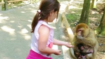 Even children feed the monkeys by hand