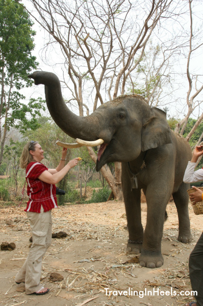 Patara Elephant Farm Thailand, Photo by Diana Rowe, Traveling Grandmom