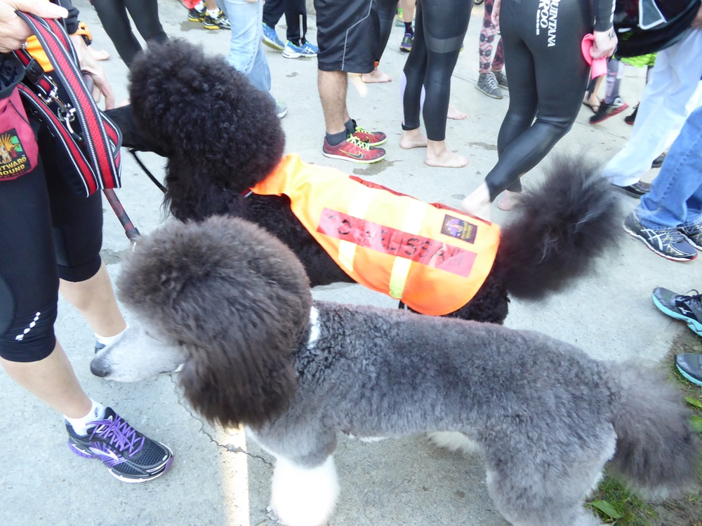 How to Safely Take Your Dog to an Event – But Should You?