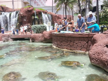 Feeding the turtles and other marine animals is one of the free daytime activities available to guests at Atlantis. Photo credit: Gwen Kleist, Healthy TravelingMom.