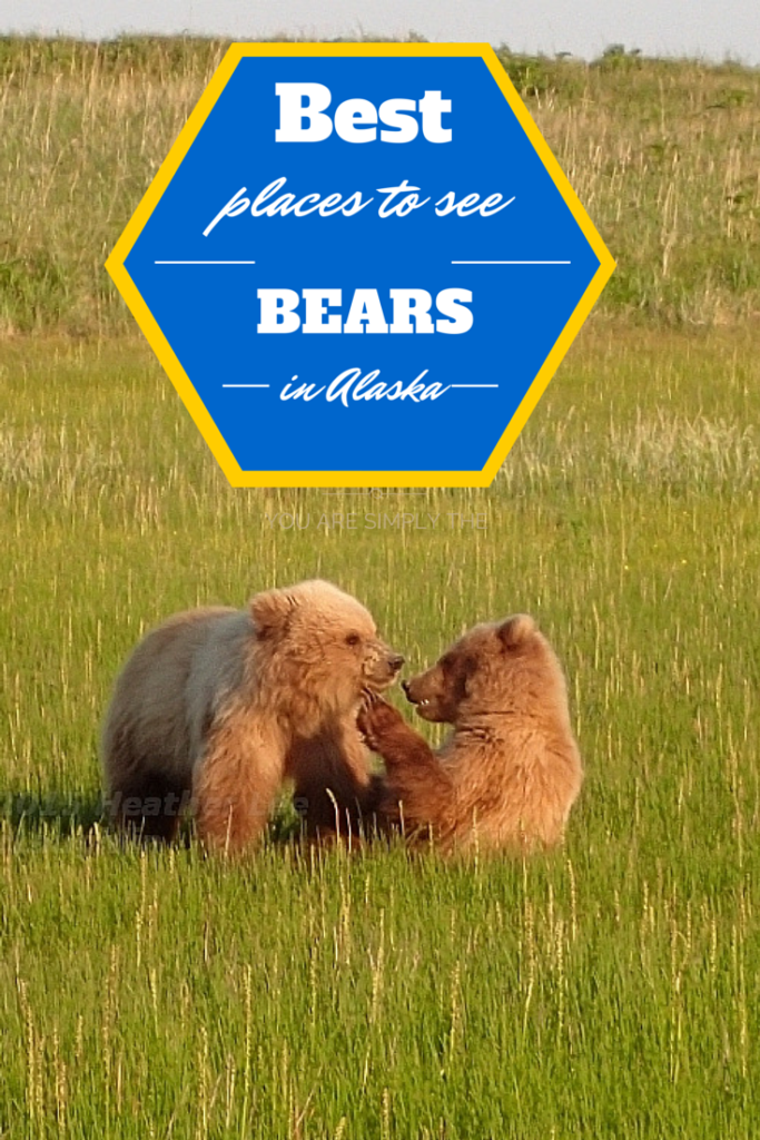 Best places to see bears in Alaska