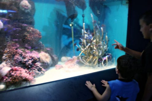 Ocean Explorations at the Birch Aquarium in San Diego