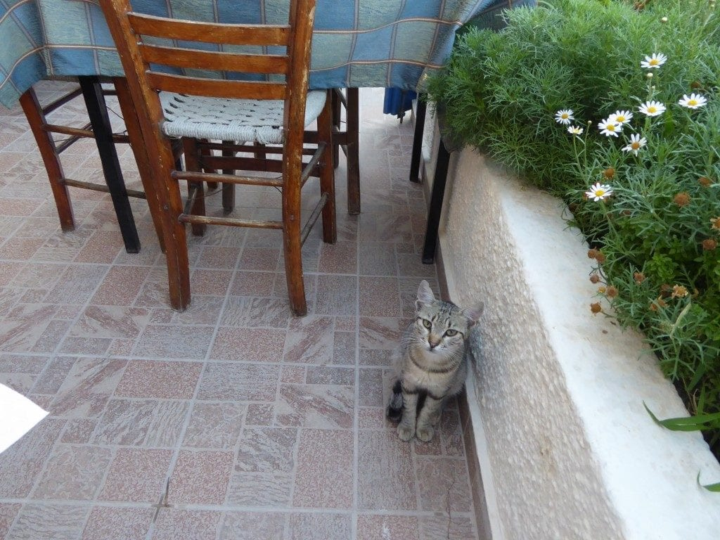 Photo by Jamie Bartosch/Suburban TravelingMom Cats are everywhere in Greece, especially outdoor restaurants.