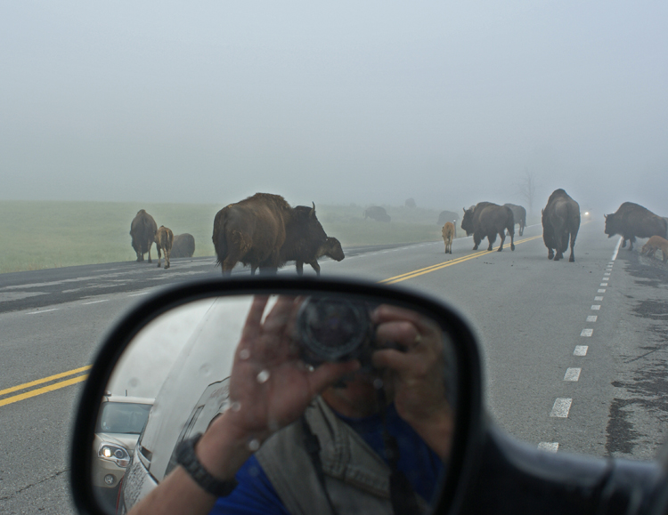 Warm welcome from Yellowstone National Park bison.