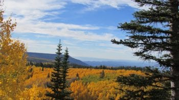 Fall colors of Colorado's Grand Mesa
