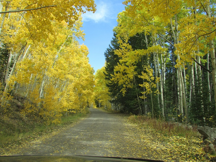 Fall colors in Colorado's Grand Mesa