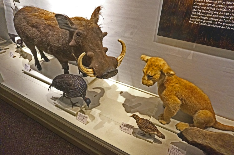 Africa Gallery at Harvard Museum of Natural History
