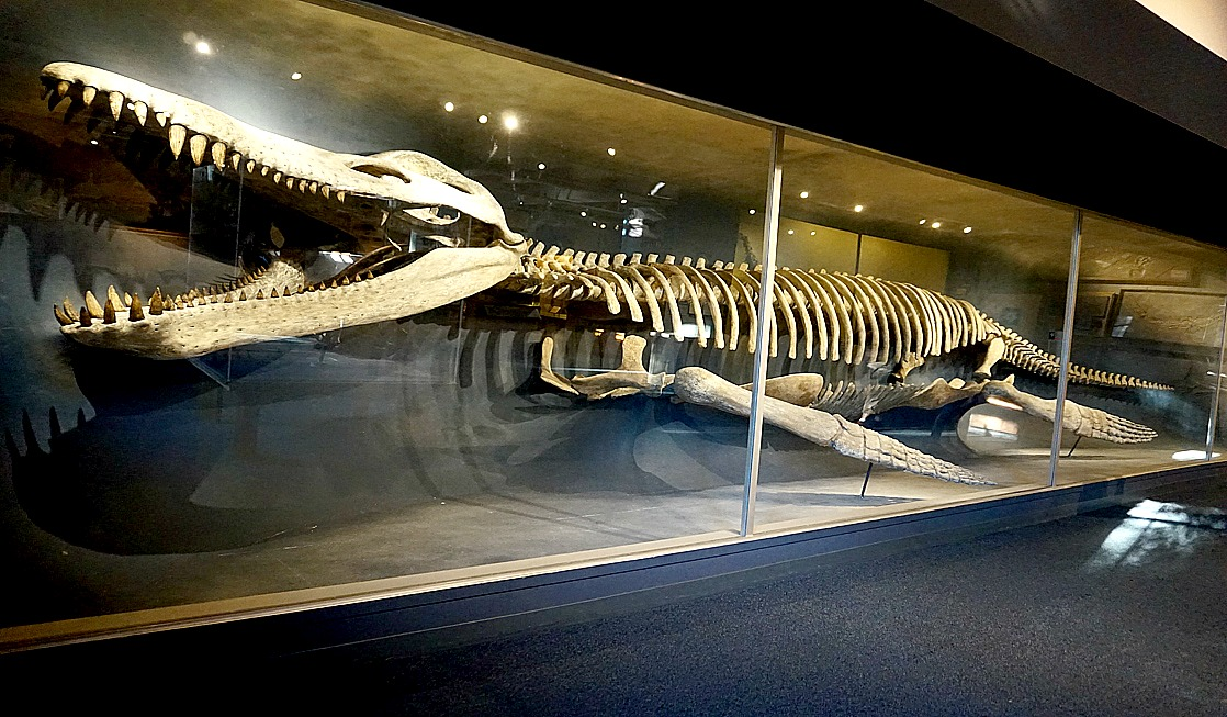 Harvard Museum of Natural History –  Great Attraction for Kids and Adults Alike