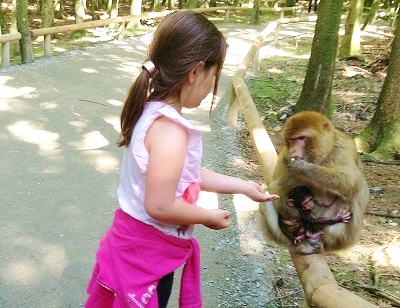 Even children feed the monkeys by hand in Europe