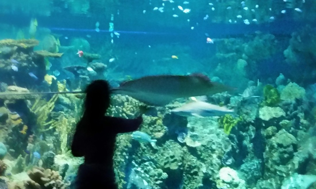 Enjoying the Baltimore Aquarium.  Photo by Dia Adams