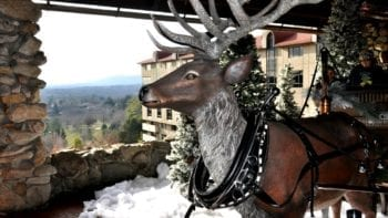 Reindeer at Omni Grove Park Inn.