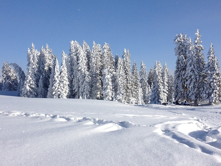 Reasons Your Family Will Love Snowshoeing Winter Beauty