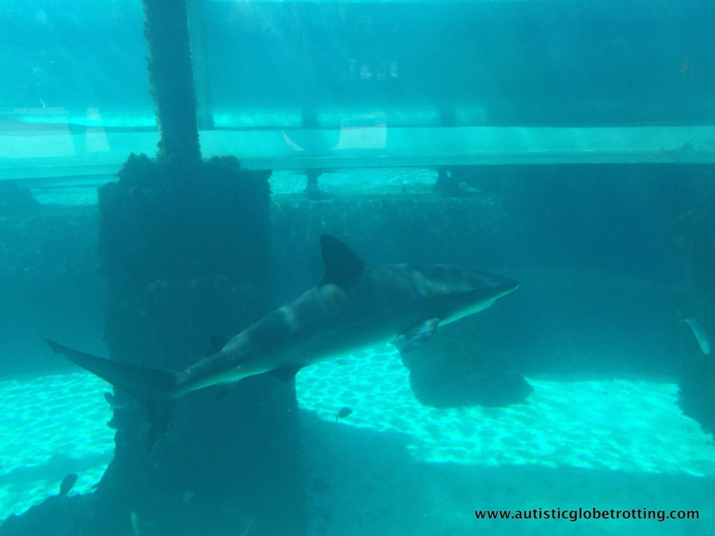 Spend the Day at Atlantis in the Bahamas