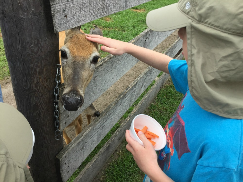Petting Deer at Dutch Creek Farm Animal Park