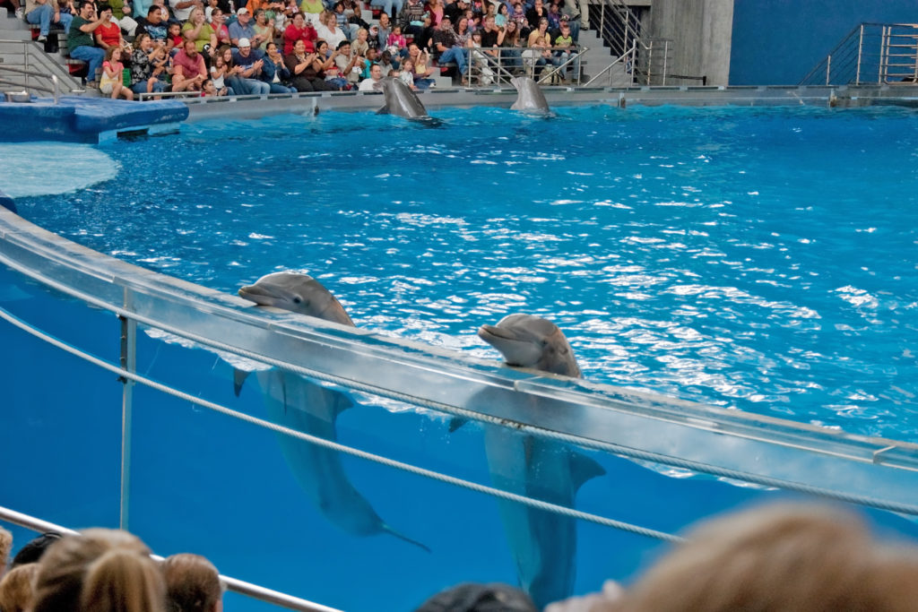 Bottlenose dolphins in the marine mammal pavilion at the Baltimore Aquarium