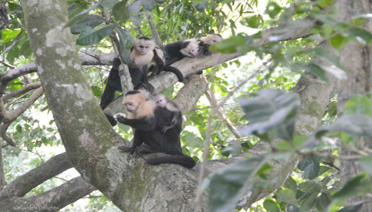 Spying a baby monkey in Costa Rica.