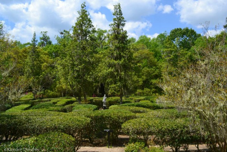 Don't panic! You will find your way out of the maze at Magnolia Plantation and Gardens!