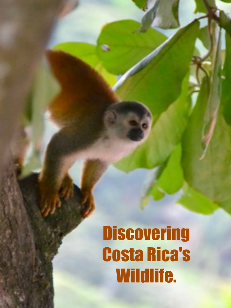 Magical Costa Rica: Flora and Fauna Fun in Manuel Antonio National Park