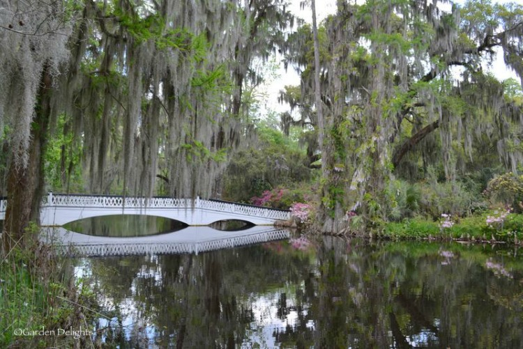 The elegant white bridge at Magnolia Plantation and Gardens provides the perfect backdrop for photo ops.