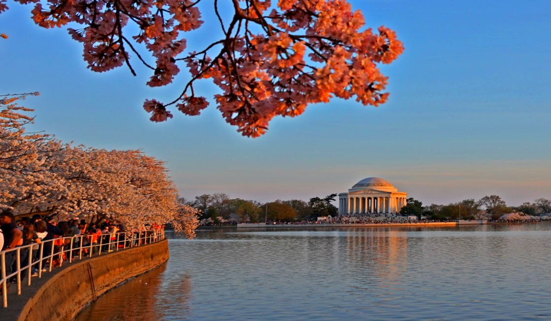 Cherry Blossom Spectacular of Washington D.C.