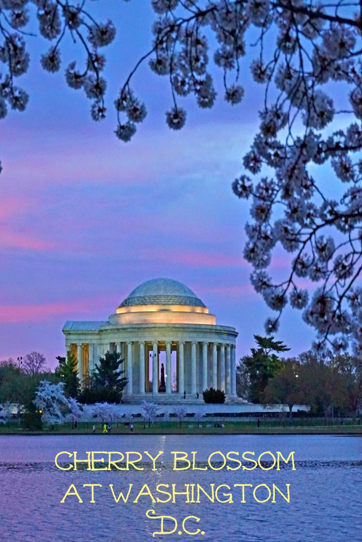 Cherry Blossom at Washington D.C.
