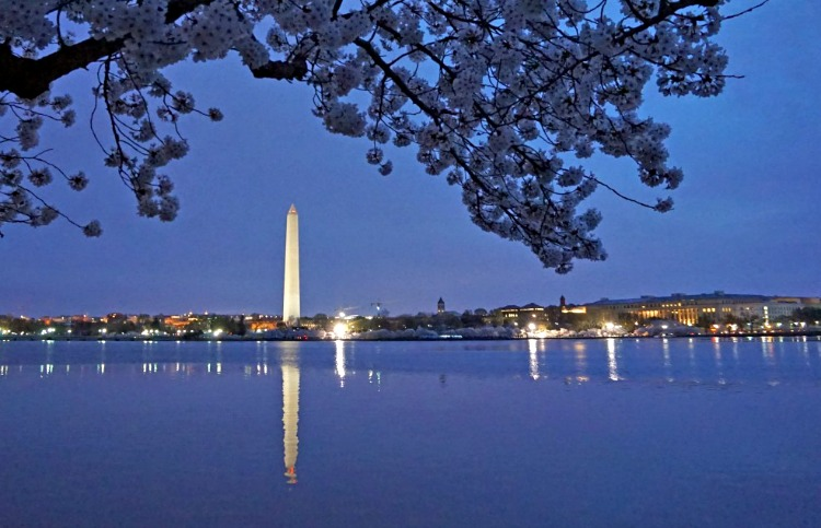 Washington D.C. Cherry Blossom